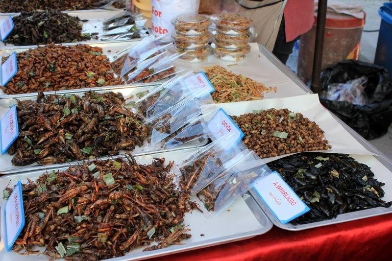 degustation insectes